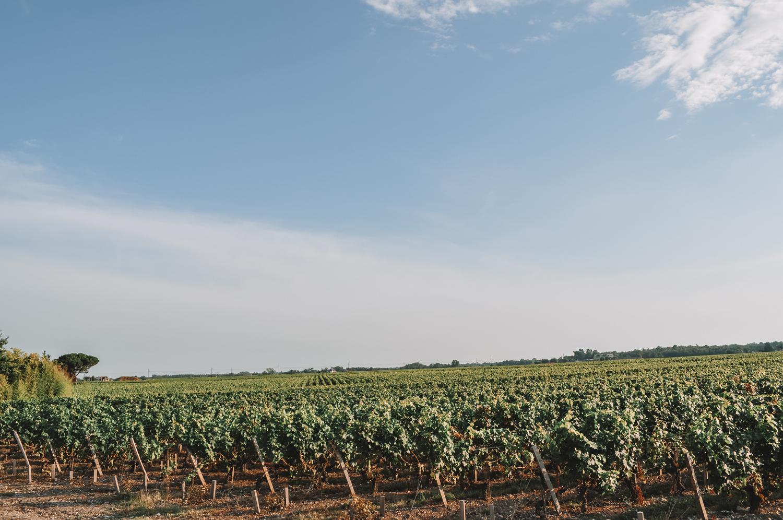 Les vignobles de Bordeaux à la sortie de la ville