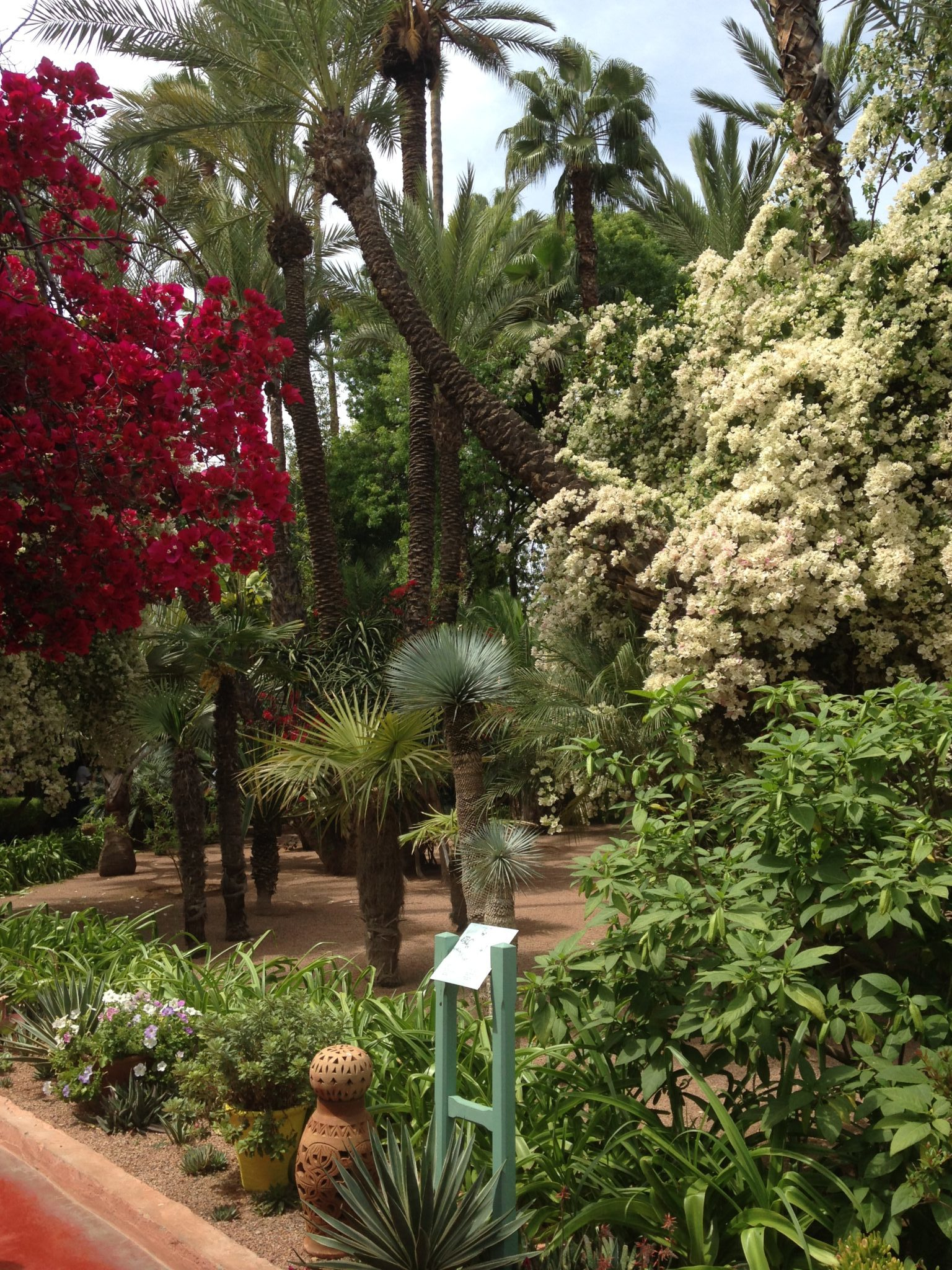 Une végétation dense et luxuriante