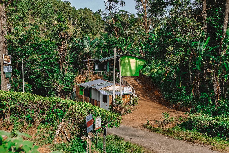 Notre maison d'hôtes au milieu de la forêt et des plantations de thé