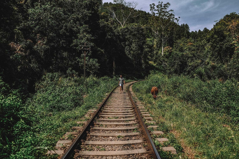 Julien découvre une vache au bord de la voie ferrée