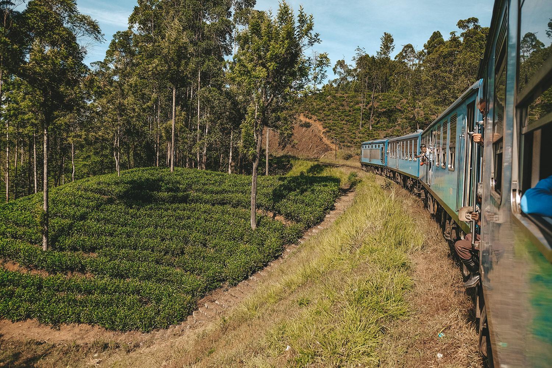 Une magnifique traversée dans les champs de thé