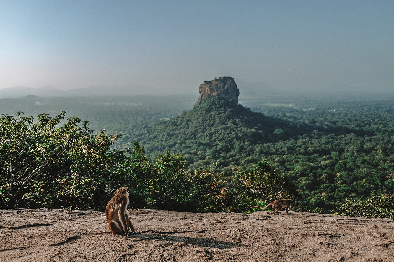 """Vue du """"Lion Rock"""" en haut du mont """"Pidurangala"""""""