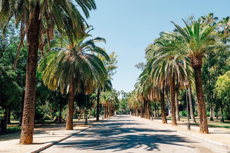 Des allées de palmiers magnifiques