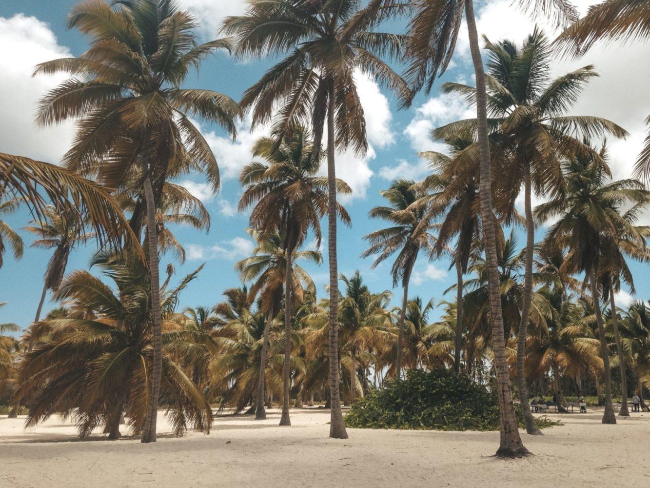 Des palmiers immenses pour te procurer un peu d'ombre sur les plages