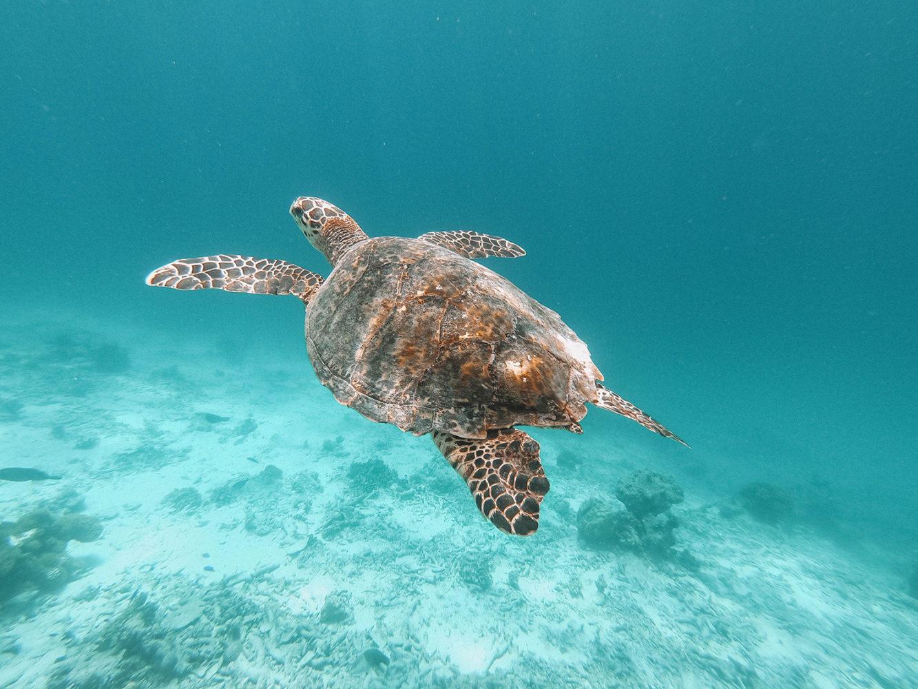 Notre amie du séjour aux Maldives