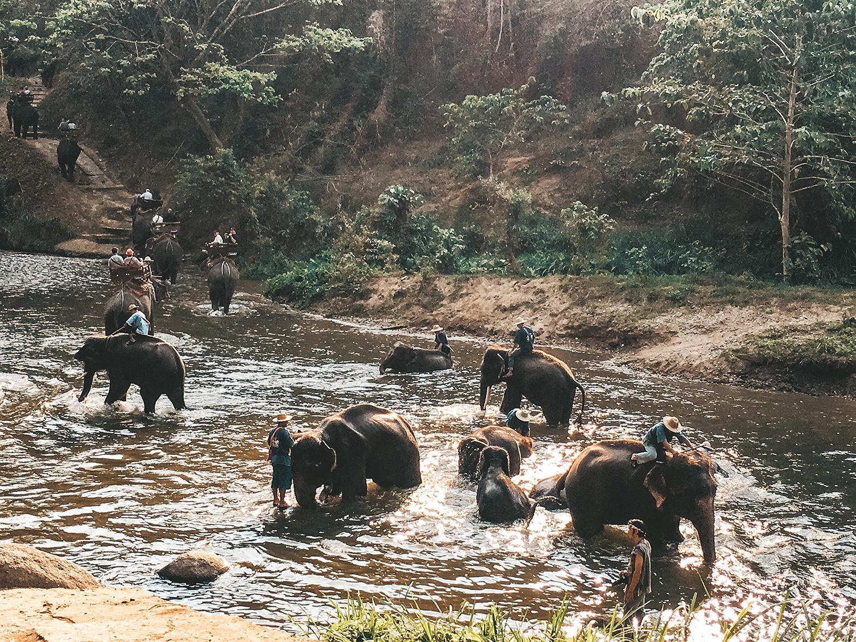 Nettoyage des éléphants avant leur dure journée de travail