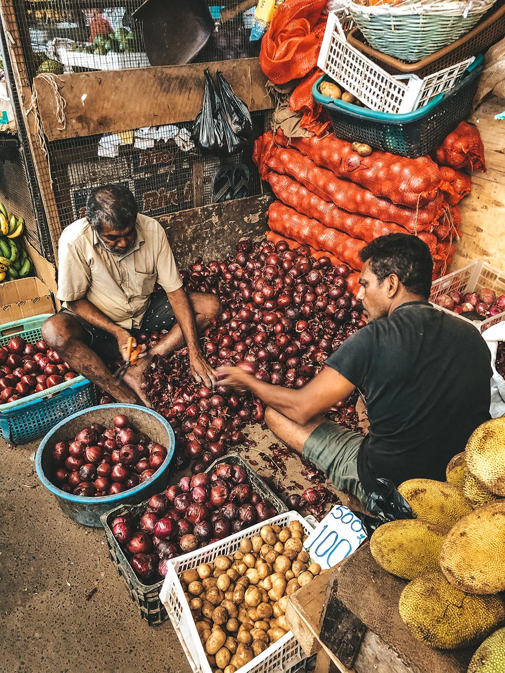 Triage des oignons rouges