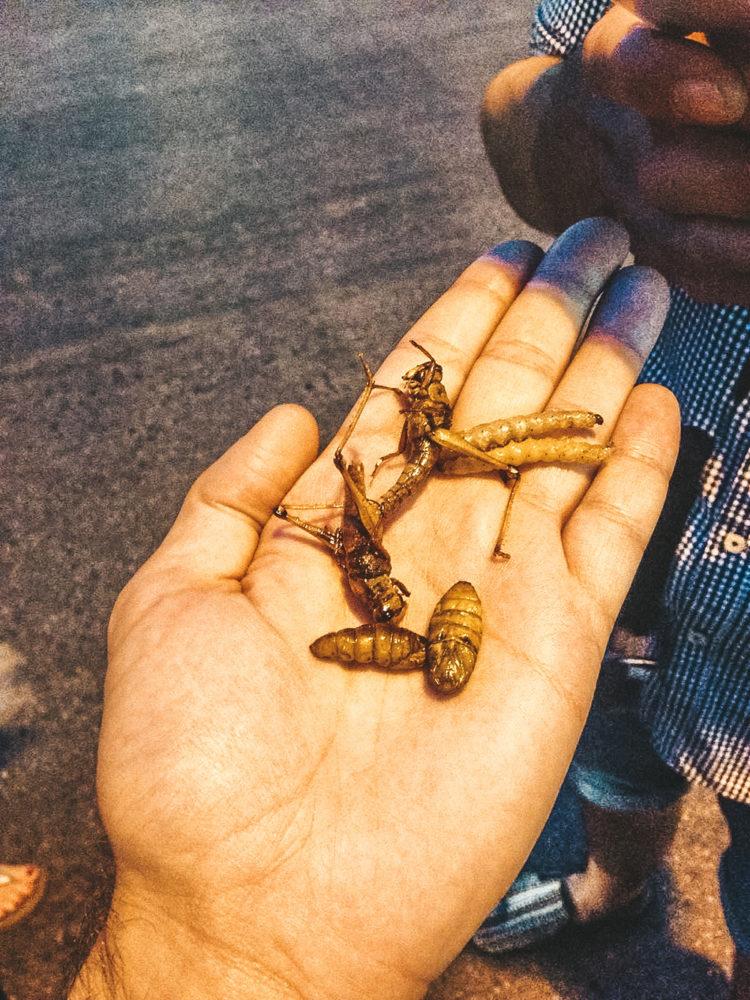 Dégustation d'insectes grillés