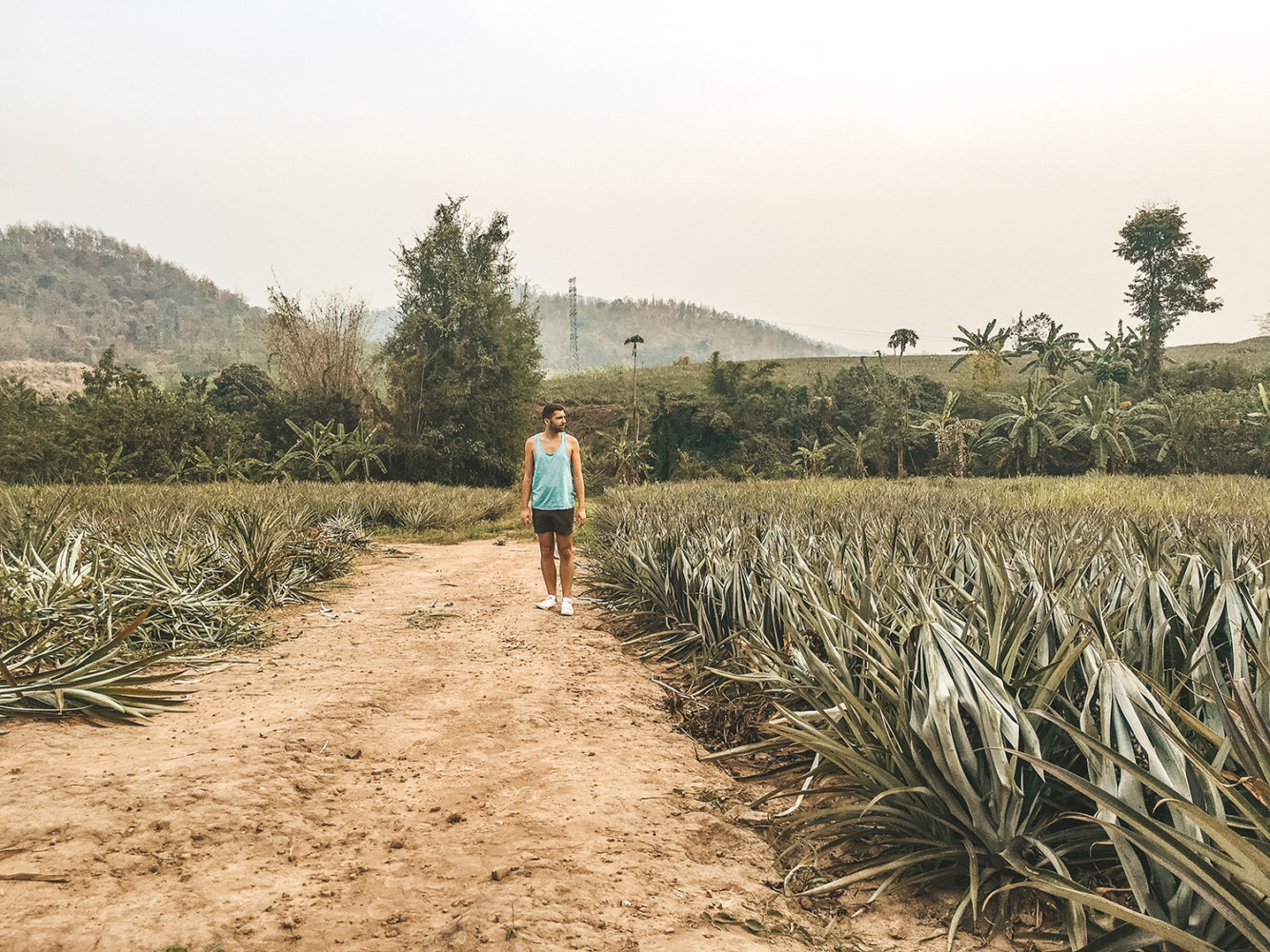 Julien dans un champ d'ananas