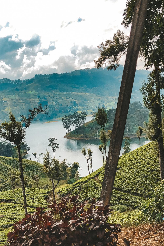 La vue sur les plantations de thé depuis le bus