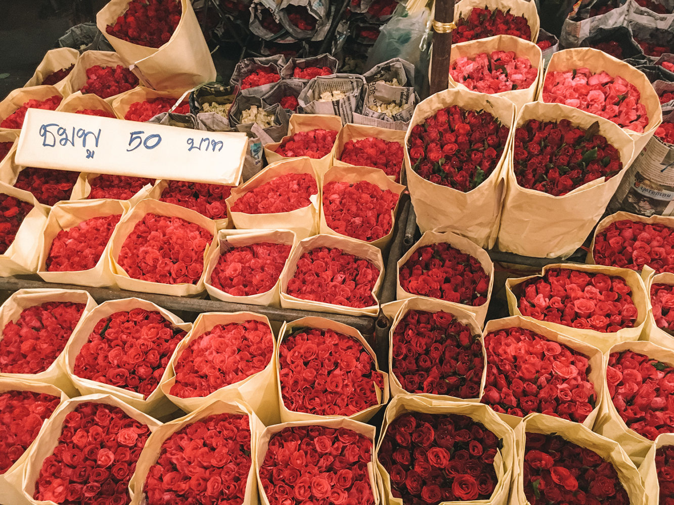 Les roses de Thaïlande