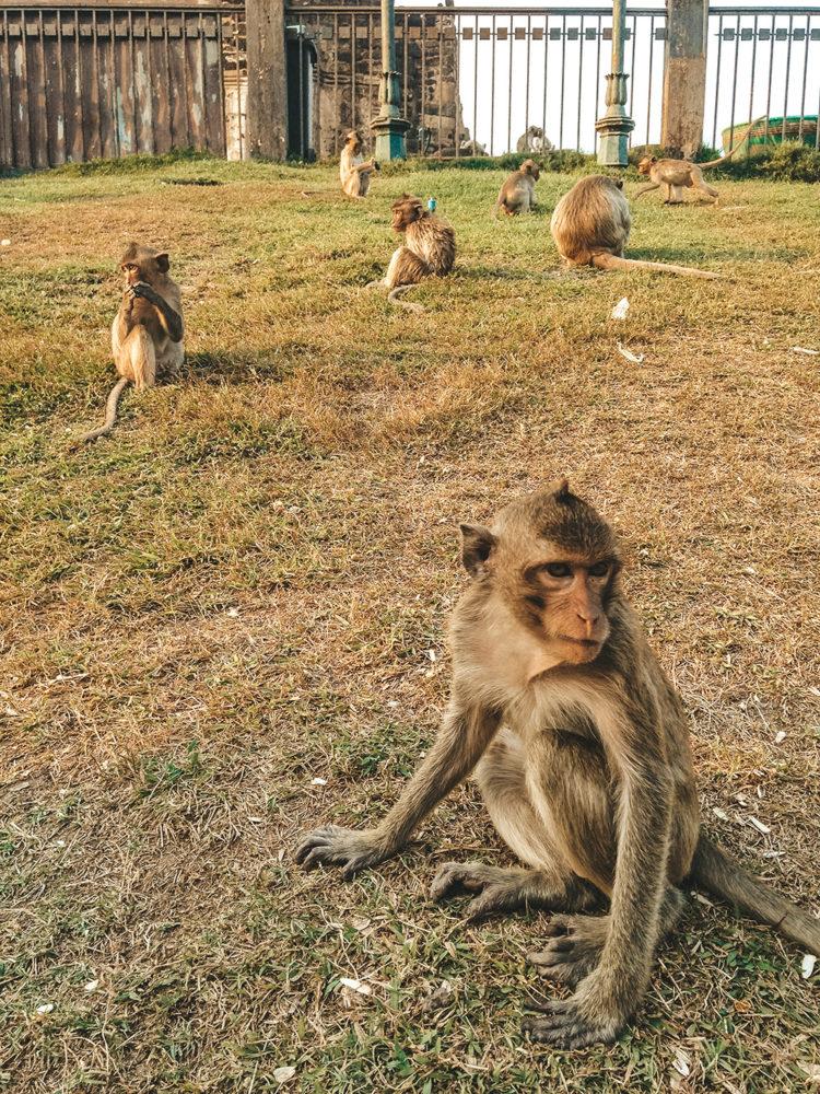 Le territoire des singes