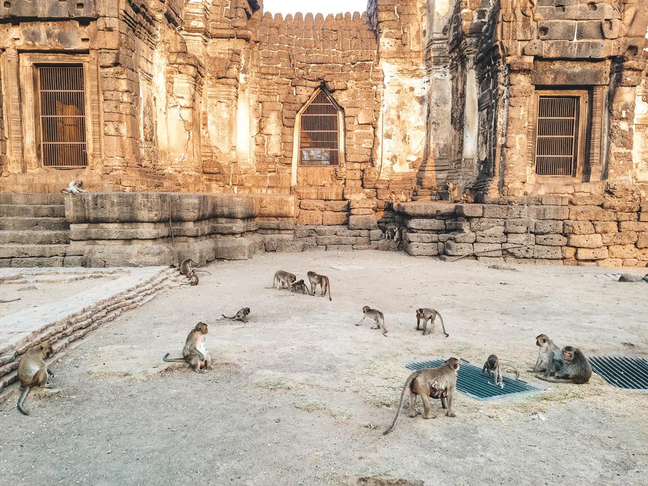 Le temple des singes