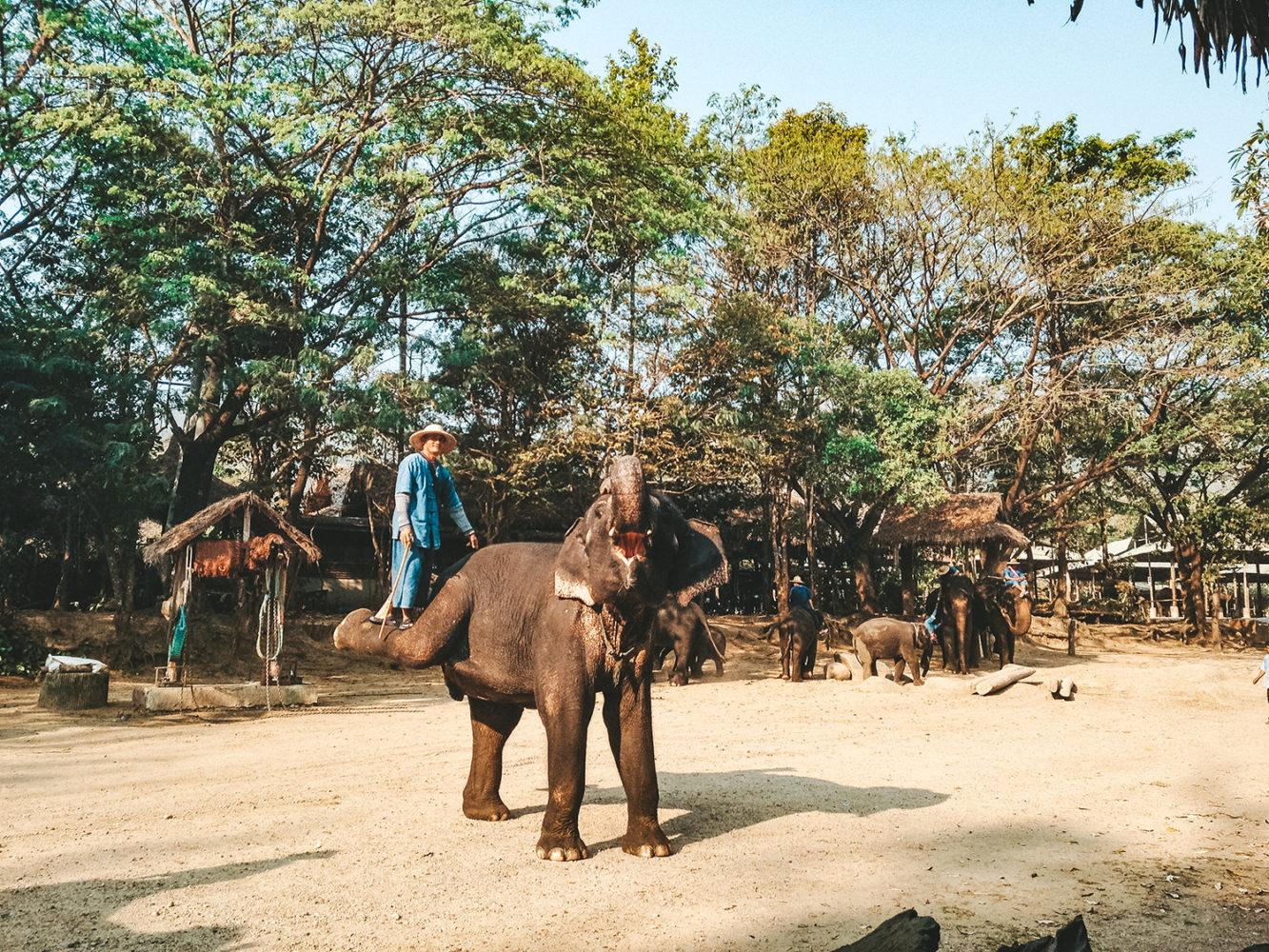 Le pied de l'éléphant est une zone très sensible