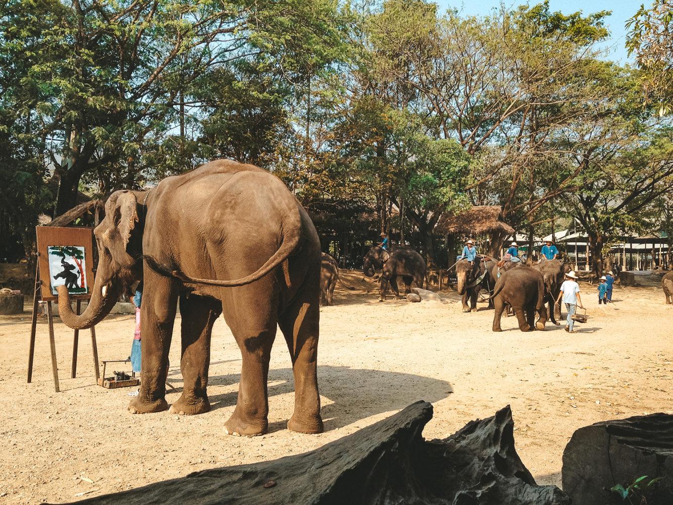 La triste réalité des spectacles d'éléphants