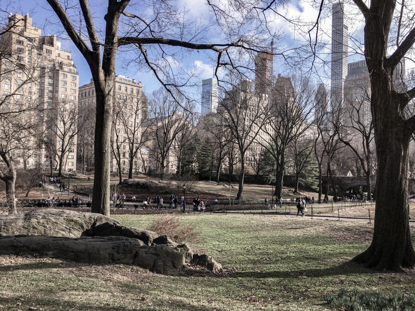 La vue sur les buildings depuis le parc