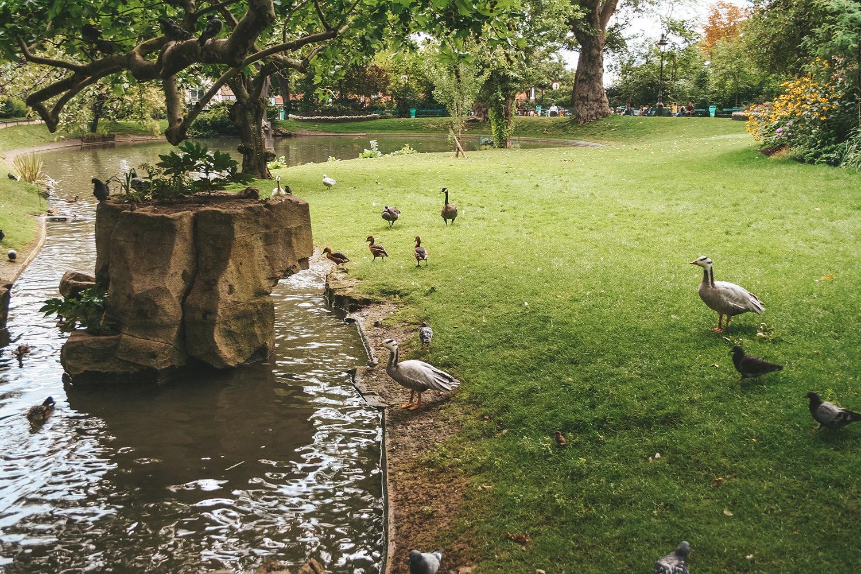 Les canards des Batignolles