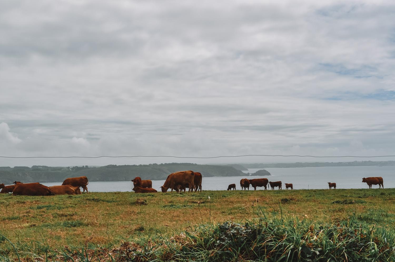 Elle ne sont pas bien là les vaches ?
